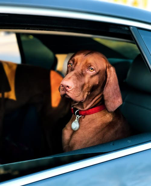 Road Trip Tips For Traveling With Your Dog 4