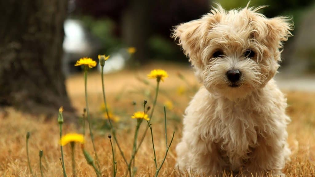 small mixed breed dogs