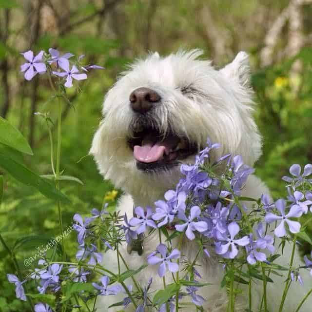 aromatherapy for dogs