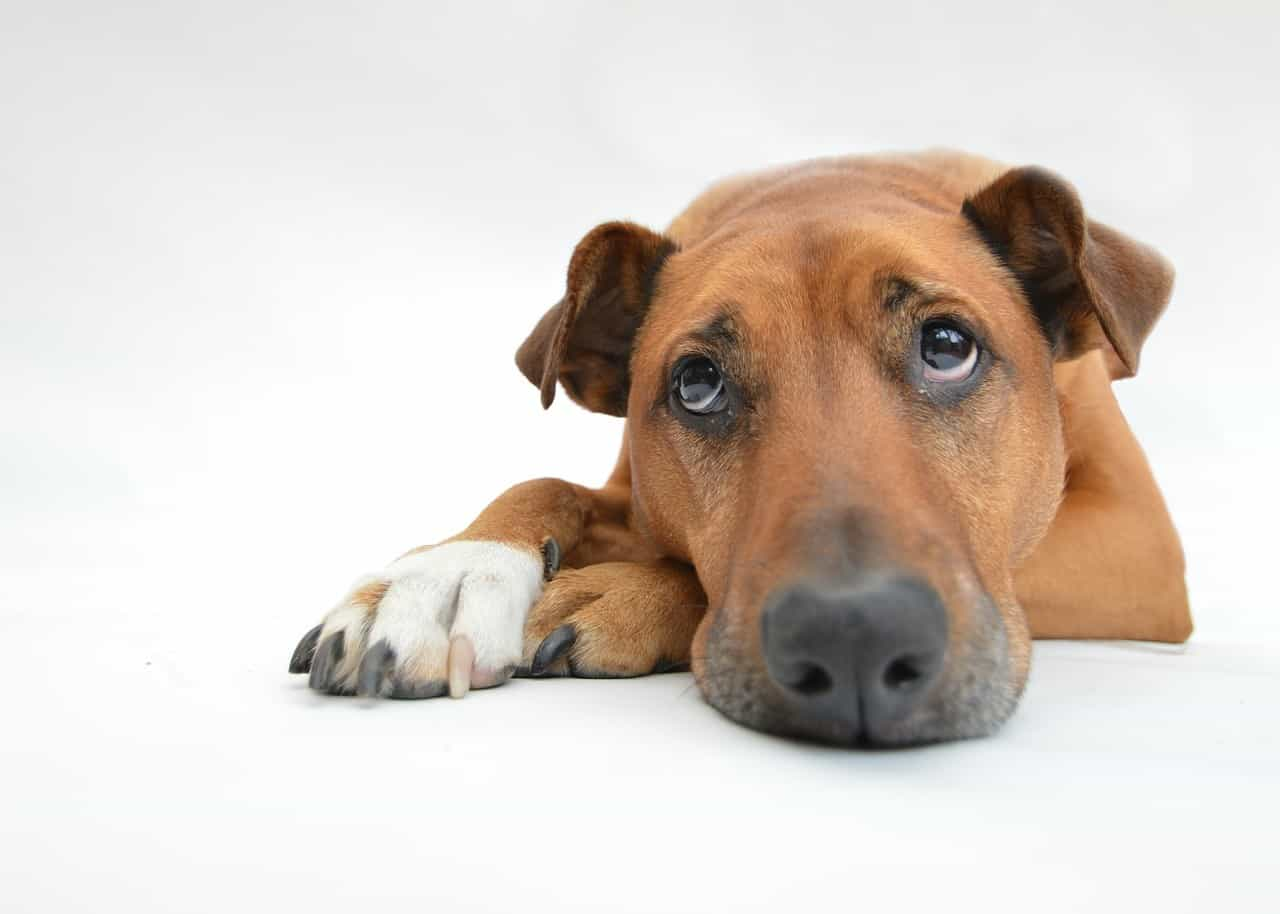 Most Common Food Allergies in Dogs and What to Do About It