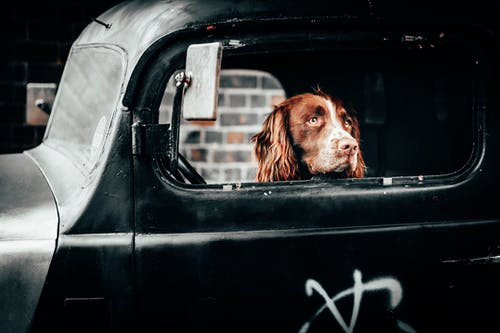 Road Trip Tips For Traveling With Your Dog 2