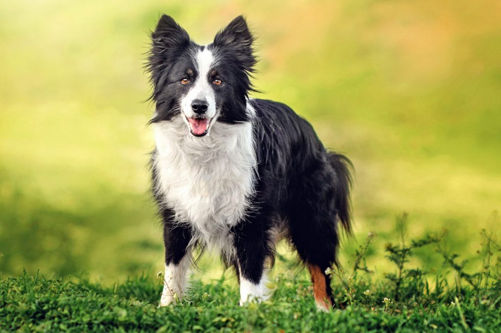 How To Choose The Right Dog Breed According To Your Personality 2