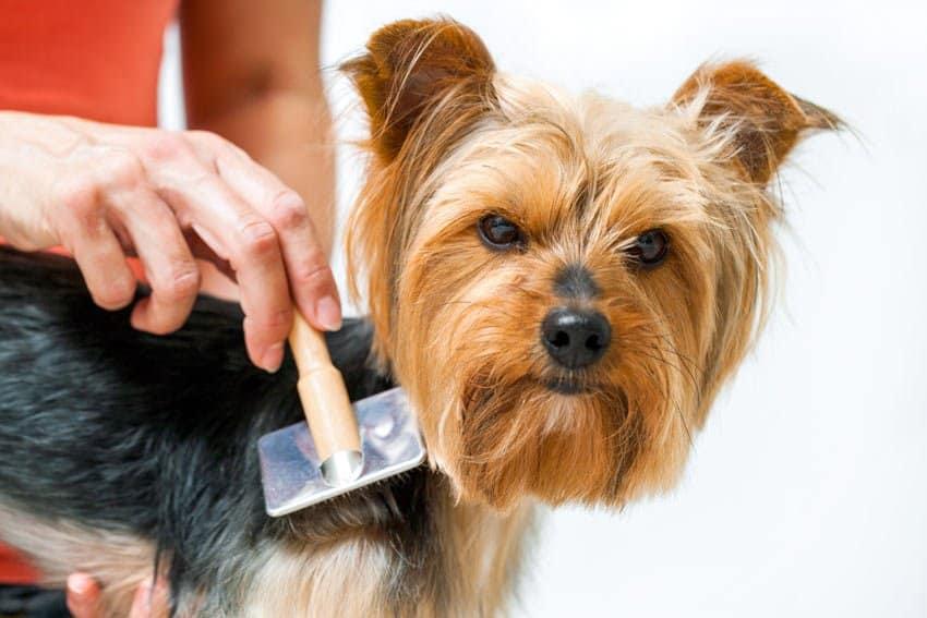 brushing your dog