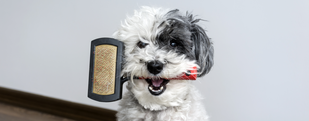 choosing right dog brush