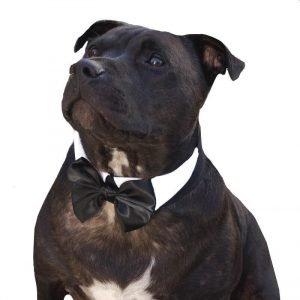 dog bow tie collar