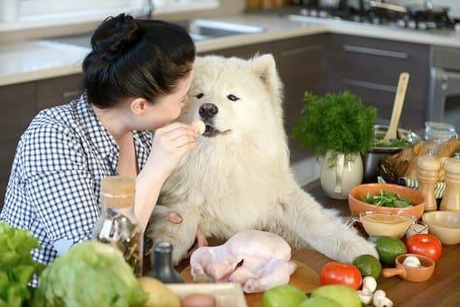 dog diet