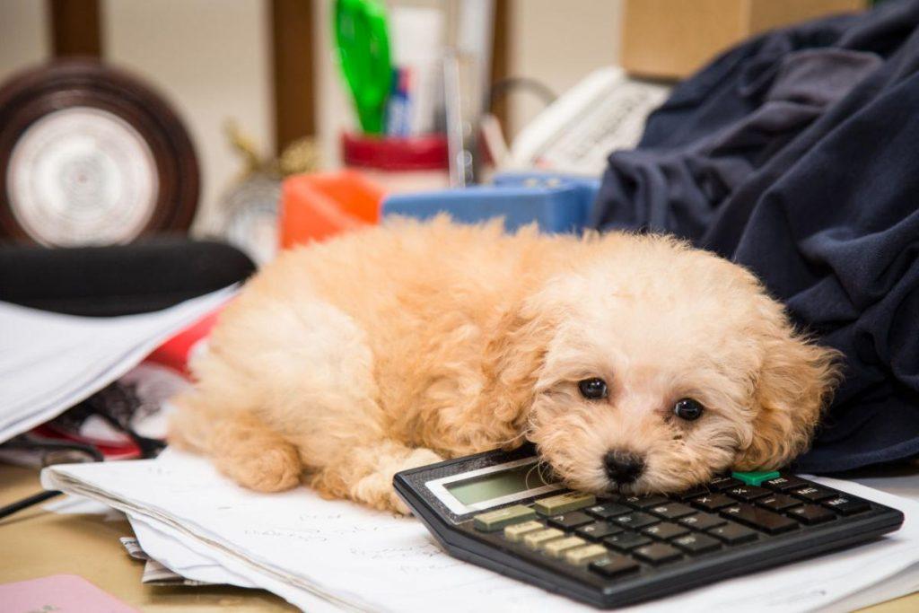 dog with calculator