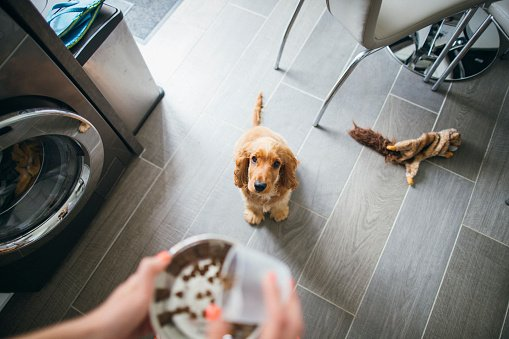 How To Plan A Diet For Your Dog 2