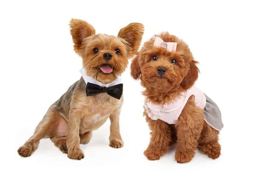 Choosing Between a Male and Female Dog 4