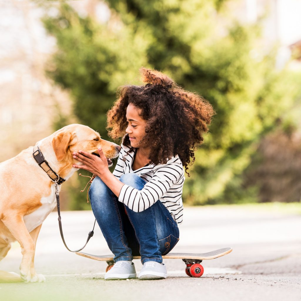 The Top Reasons Why Investing In Dog Training Will Benefit Both You And Your Dog 4