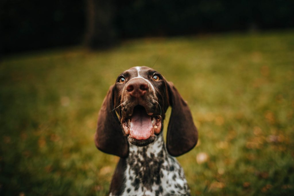 How To Ensure That Your Beloved Dog Is Healthy And Happy 4