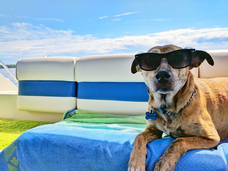 Finding the Paw-Fect Dog Hotel: 6 Things to Consider 2