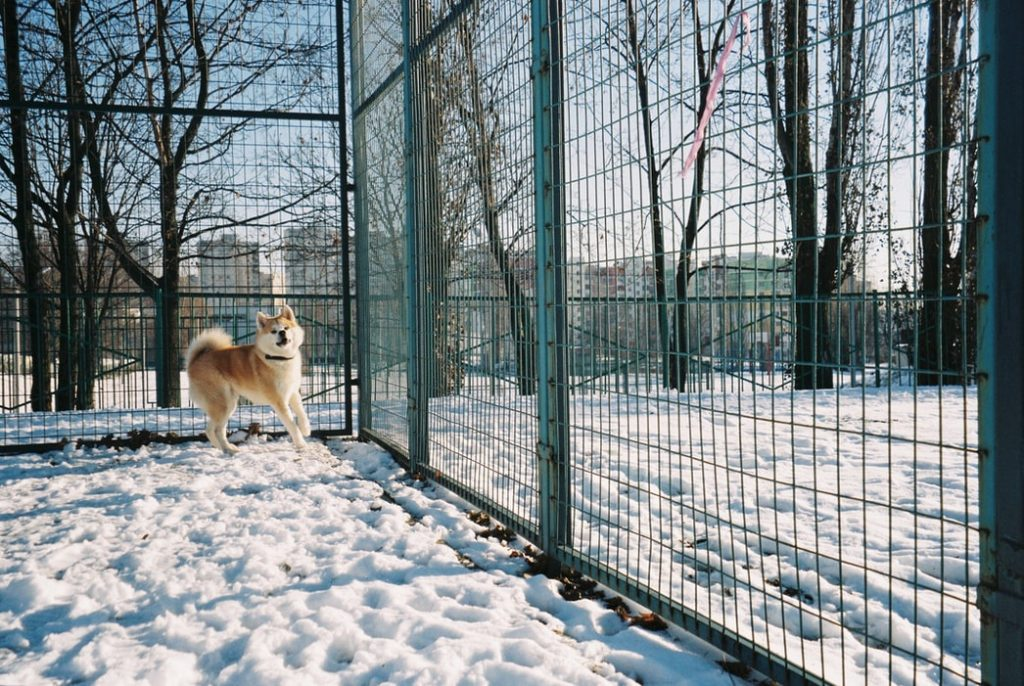 Things You Need to Consider When Installing a Dog Fence 4