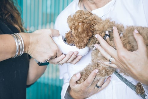 Several Tips for Starting Your Veterinary Practice