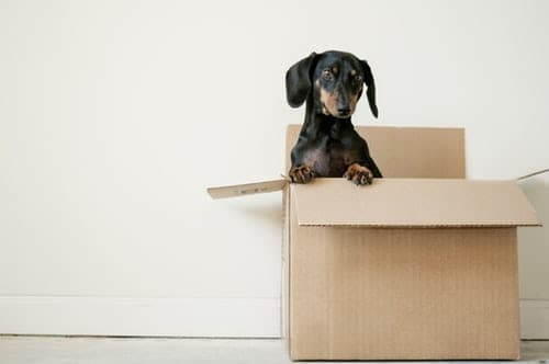 Tips for Reducing Your Dog's Stress While Moving