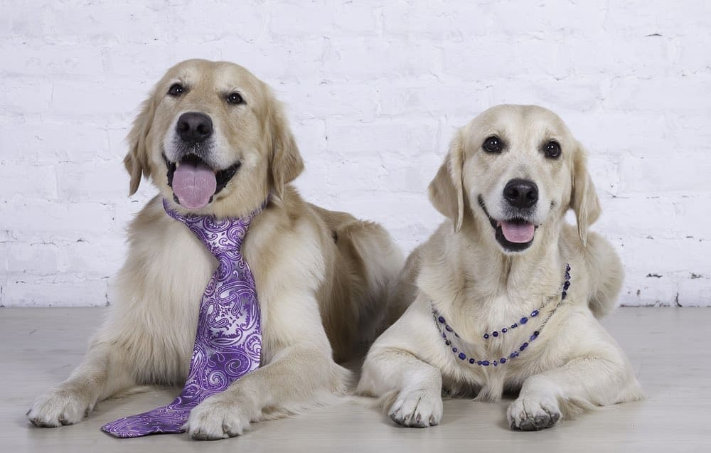 Choosing Between a Male and Female Dog 2