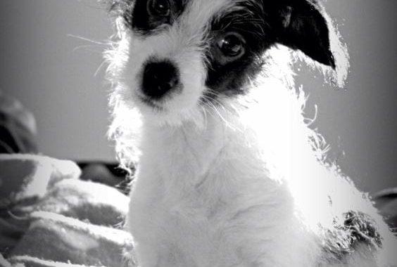 Pini Poo: The Adorable, Loyal, and Loving Little Dog
