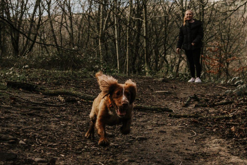 pup running