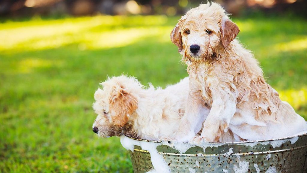 6 Tips To Help You Take Better Care Of Your Dog 4