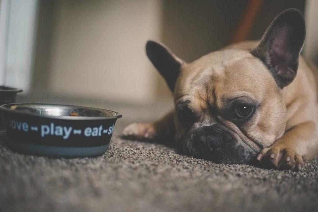 quality dog food