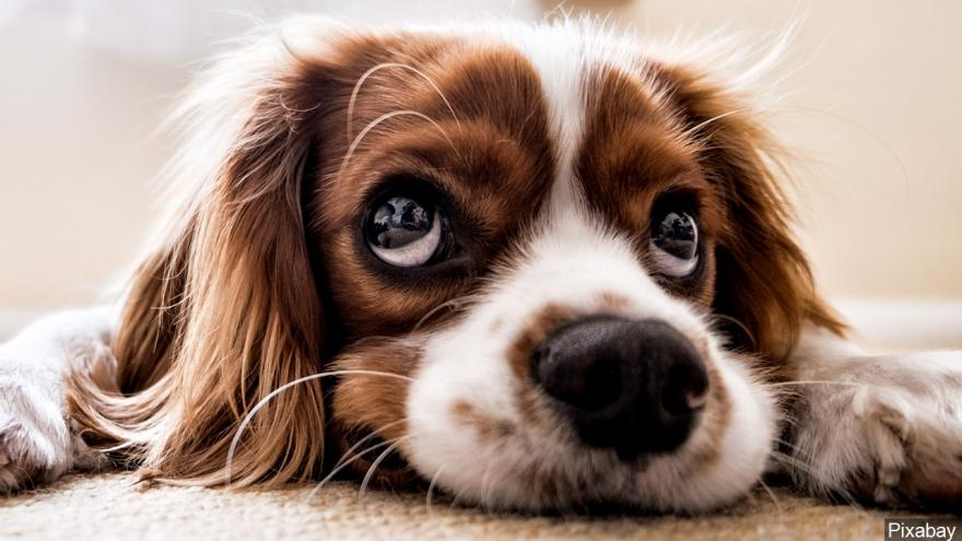 6 Tips To Help You Take Better Care Of Your Dog 2