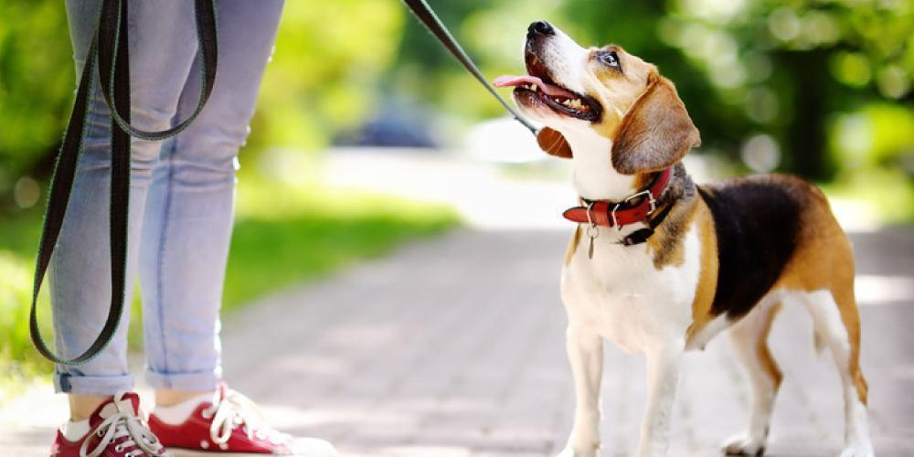 The Top Reasons Why Investing In Dog Training Will Benefit Both You And Your Dog 2