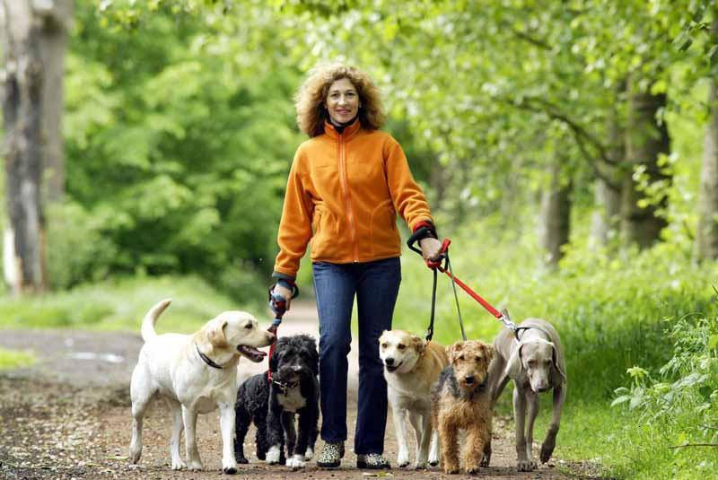 Dog Walker: How to Find the Time to Get Out With Your Dog 4