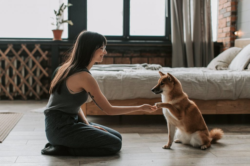 6 Tips For New Dog Owners 4